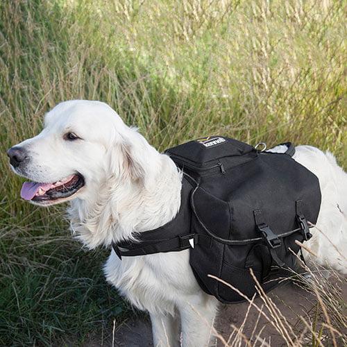 Miljøfoto av hund med kløv