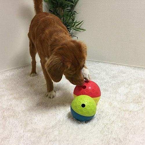 Hund som leker med aktivitetsleke godbitball.