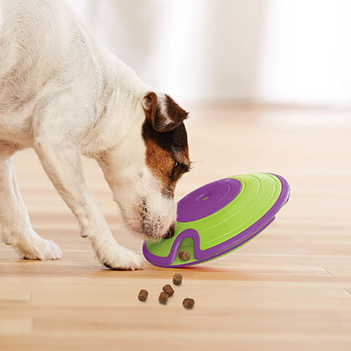 Hund som leker med godbit labyrint aktivitetsleke fra Nina Ottosson.