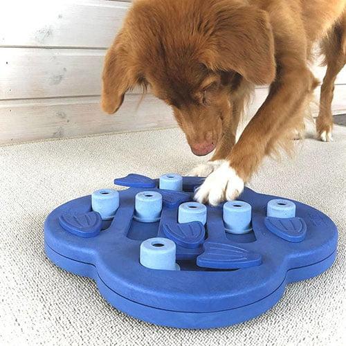 Hund som leker med IQ-leke fra Nina Ottosson.