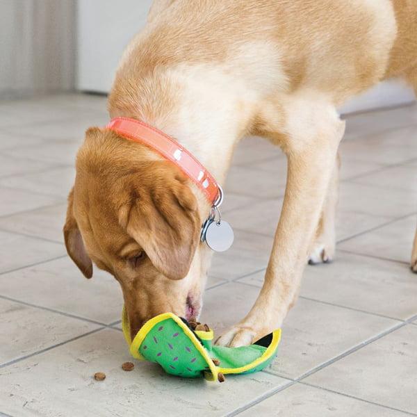 Miljøbilde av Kong ballistic aktivitetsleke til hund
