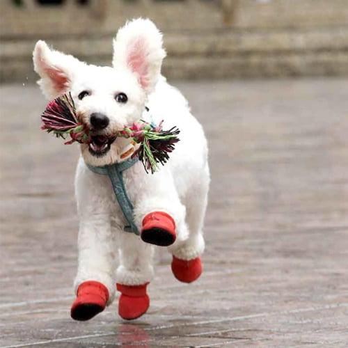 Miljøbilde av hund med myke vintersko
