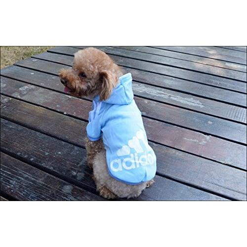 Miljøfoto av hund med adidog hettegenser lys blå