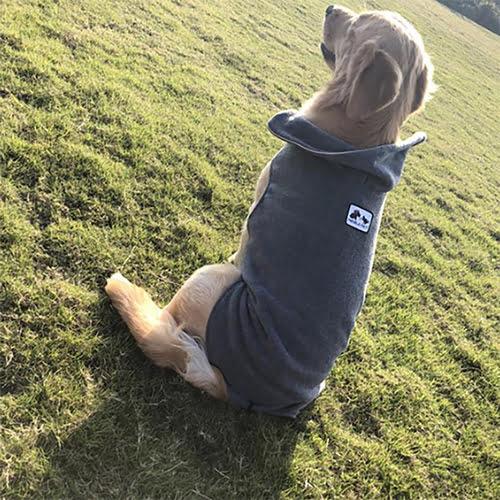 Miljøfoto av hund med grå Noble Pet fleecedekken
